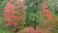 Autumn foliage panarama