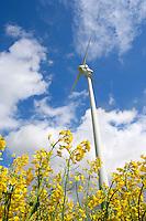 Alternative Energie: EUROPA, DEUTSCHLAND, HAMBURG, (GERMANY), 06.05.2005: Wind, Windkraft, Windrad, Windraeder, Windmuehlen, Windgeneratoren, Windturbinen, alternative Energie, erneuerbar, Anlage, Windenergie, Windenergieanlage, WEA, Kraftwerk, Windkraftanlage, Windkraftwerk, Wind-Kraftwerk, regenerative Energiequelle, Energiebedarf, Ressourcen, elektrischer Strom, Stromerzeugung, Stromquelle, dezentrale Energieversorgung, Energiegewinnung, kommunal, Wirtschaft, Energiewirtschaft, Elektrizitaet, Industrie, Investition, Umwelt, umweltfreundlich, Umweltpolitik, Landschaft, Raps, Pflanzen, Blueten, gelb, Feld, Rapsfeld, Rohstoff, Himmel, Wolken, Oekologie, Ueberblick, Uebersicht, Deutschland, Windraeder, Windmuehlen, Elektrizitaet, Blueten, Oekologie, Ueberblick, Uebersicht.c o p y r i g h t : .A U F W I N D - L U F T B I L D E R . de.G e r t r u d - B a e u m e r - S t i e g 1 0 2,.2 1 0 3 5 H a m b u r g , G e r m a n y .P h o n e + 4 9 (0) 1 7 1 - 6 8 6 6 0 6 9.E m a i l H w e i 1 @ a o l . c o m .w w w . a u f w i n d - l u f t b i l d e r . d e.K o n t o : P o s t b a n k H a m b u r g .B l z : 2 0 0 1 0 0 2 0  K o n t o : 5 8 3 6 5 7 2 0 9.C o p y r i g h t n u r f u e r j o u r n a l i s t i s c h Z w e c k e, keine P e r s o e n l i c h ke i t s r e c h t e v o r h a n d e n, V e r o e f f e n t l i c h u n g n u r m i t H o n o r a r n a c h M F M, N a m e n s n e n n u n g u n d B e l e g e x e m p l a r !.
