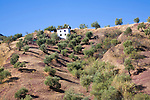 White farmhouse on hillside in olive grove at El Gastor, Cadiz province, Spain