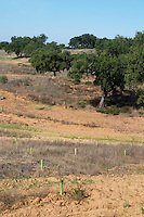 dry fields with oak trees herdade de sao miguel alentejo portugal