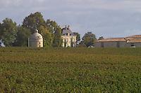 Vineyard. Medoc, Bordeaux, France