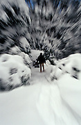Adult male snowshoeing in a New England forest.  Motion blur used to direct focus to snowshoer