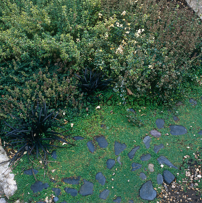 A view from above of a garden with shrubs and a lawn path set with black stones.