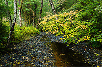 Creek and forest