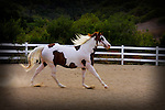 BLUE RIBBON/1st place in Action, Photo Journalism, category | A horse names Texas<br />