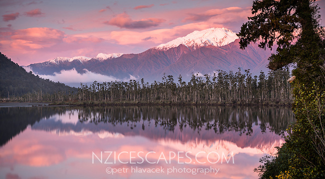 Sunset at Lake Wahapo near Whataroa with kahikatea grove and Mt. Adams in background, Westland National Park, West Coast, World Heritage Area, New Zealand