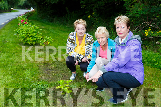 Vera O'Sullivan  Ann McKenna  Joan Connors point to where plants have been stolen in Glenbeigh