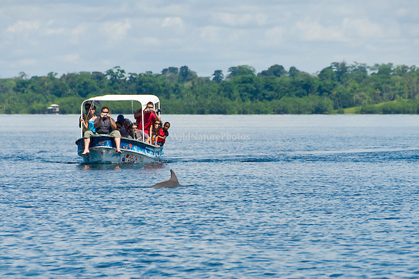 Tourists viewing a Southern or Common Bottlenose Dolphin (Tursiops truncatus) in Dolphin Bay, Bocas del Toro, Panama