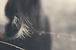 the soft velvet nose of a pony