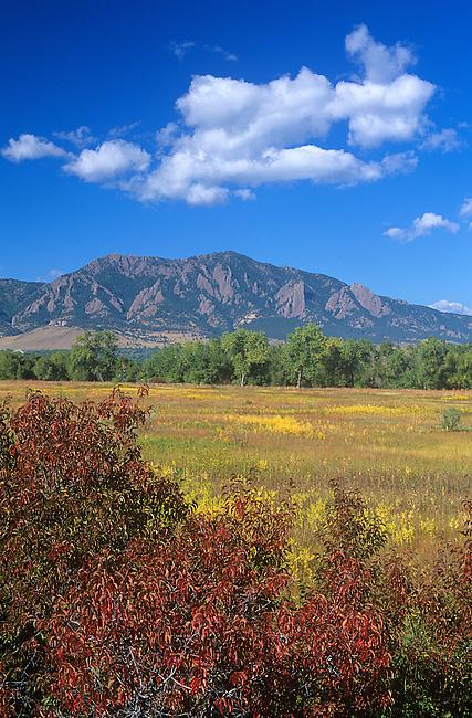 Sumac, Cherry, Boulder, Colorado