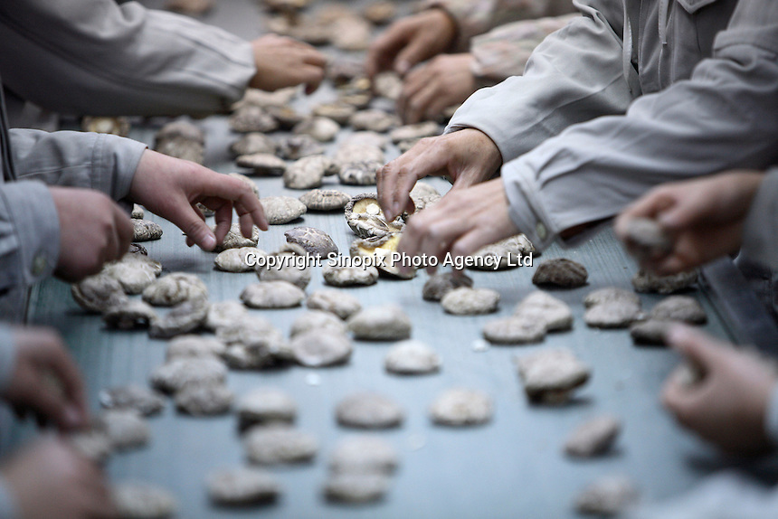 Workers inspect and sort dried Shitaki mushrooms at the Sanyo Food Co. in Sanligang Township, Suizhou City, China.