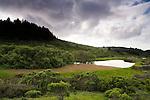 Pond in northern coastal scrub and northern coastal prairie ecosystem, Pescadero, California