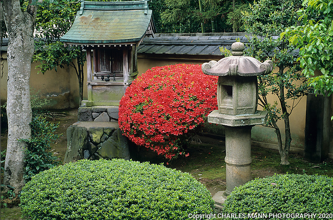 In this temple garden in the Daitokuji complex a single blooming azela surrounded by mossy shrine and lantern seems to represent the Japanese love of surprise and playfulness.
