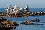 rocks at Hopkins Marine Lab