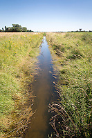 Drainage dyke - July, South Lincolnshire