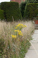 Wildflowers and grasses grow alongside a stone path at Great Dixter