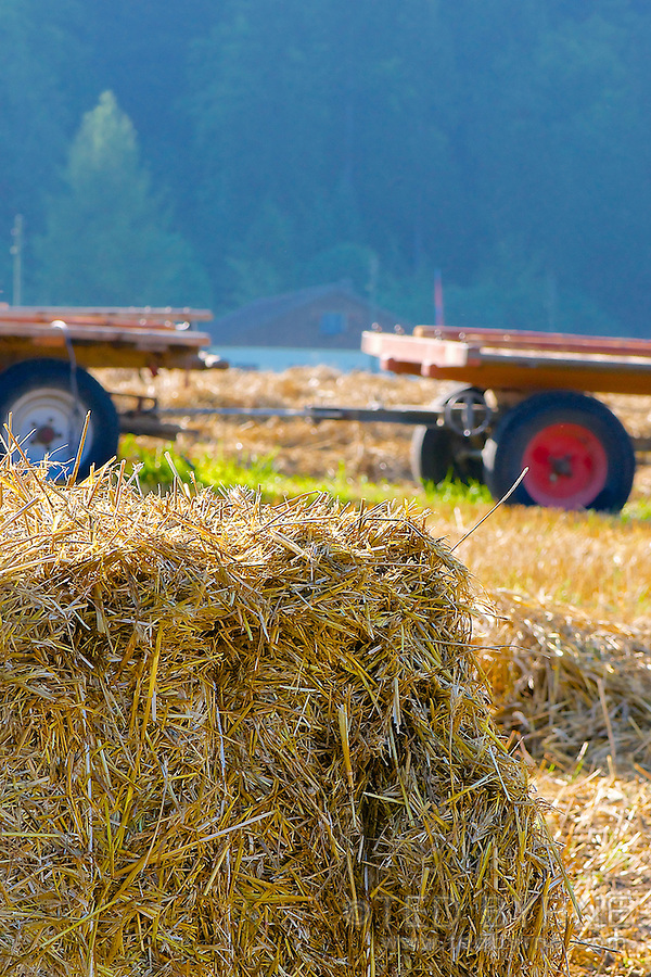 Hay bale with farm equipment in background (Val-de-Ruz, Neuchâtel)