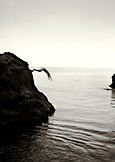 REPUBLIC OF GEORGIA, person diving from the rocks into the Black Sea (B&W)