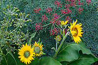 Arrowleaf balsamroot and Columbia desert parsley<br />