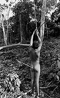 """Comunidade  dos índios Zoé's. <br /> Oriximiná, Pará, Brasil.<br /> Foto André Dusek<br /> <br /> Os Zo'é habitam uma faixa de terra firme, cortada por pequenos igarapés afluentes de dois grandes rios, o Cuminapanema e o Erepecuru, no município de Oriximiná, norte do Pará. Trata-se de uma região montanhosa de grandes castanhais, que apresenta maximização dos recursos de subsistência. Além da mandioca, que corresponde a cerca de 90% da área plantada da roça, a castanha-do-pará é o produto mais consumido pelos índios, que utilizam também a casca e a entrecasca para confeccionar a maioria de seus artefatos. O território ocupado pelos índios é entrecortado por pequenos igarapés, onde realizam pescarias com timbó. A relativa escassez de recursos faunísticos nessa zona de ocupação resulta do longo tempo de permanência das aldeias e, portanto, do esgotamento da caça. A área habitada corresponde à uma zona de """"refúgio"""", onde os Zo'é mantiveram-se isolados dos brancos, que conheciam através de contatos intermitentes há várias décadas, e de outros povos indígenas vizinhos, que consideram inimigos.<br /> Os Zo'é aceitaram a convivência pacífica com os brancos em 1987. Quatro anos depois, estima-se que tenham morrido 45 indivíduos por epidemias de malária e gripe. Em 1991, eram 133; seis anos depois, os Zo´é iniciam um processo de recuperação demográfica e a população cresce chegando a 152 pessoas."""