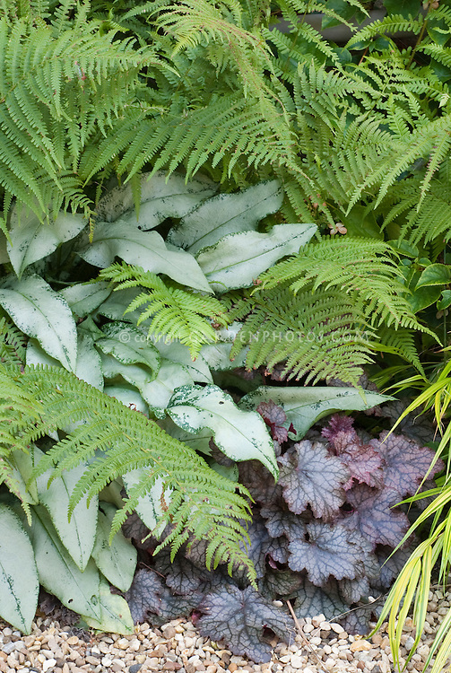 Pulmonaria Cotton Cool, Heuchera, Dryopteris fern in shade garden plant combination