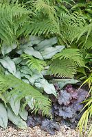 Pulmonaria Cotton Cool, Heuchera, Dryopteris fern in shade garden plant combination