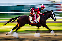BALTIMORE, MD - MAY 18: Classic Empire trains on the track in preparation for the Preakness Stakes at Pimlico Race Course on May 18, 2017 in Baltimore, Maryland.(Photo by Douglas DeFelice/Eclipse Sportswire/Getty Images)