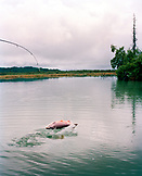 USA, Alaska, Redoubt Bay, a fisherman catches a Silver Salmon in Big River