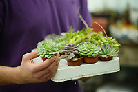 BNPS.co.uk (01202 558833)<br /> Pic: ZacharyCulpin/BNPS<br /> <br /> Succulent's are combined with preserved moss...<br /> <br /> The award winning Dorset based artist has started creating living landscapes using preserved moss and succulent's beautifully framed in discarded picture frames.<br /> <br /> Despite their verdent appearance the finished works require no watering, and will happily sit on a wall for years.