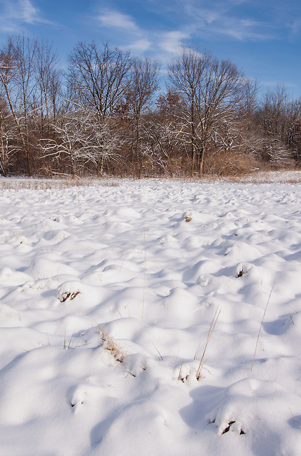Grass hummocks look like snow pillows when covered with a fresh coating of snow, Hammel Woods Forest Preserve, Will County, Illinois