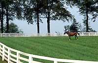Horse farm with white fence and horse grazing, Lexington, Kentucky, USA