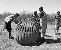 Karamoja, Uganda , Africa. -warriors making grain bins