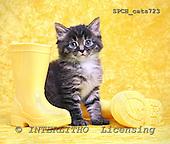 Xavier, ANIMALS, cats, photos+++++,SPCHCATS723,#a# Katzen, gatos