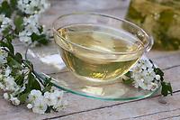 Tee aus Weißdornblüten, Weißdornblütentee, Weißdorn-Blütentee, Blütentee, Kräutertee, Heiltee, Weißdorn-Blüten, Weißdorn, Weissdorn, Weiß-Dorn, Weiss-Dorn. Eingriffliger Weißdorn, Weissdorn, Weiß-Dorn, Weiss-Dorn, Crataegus monogyna, English Hawthorn, May, tea, herbal tea, herb tea, Aubépine monogyne