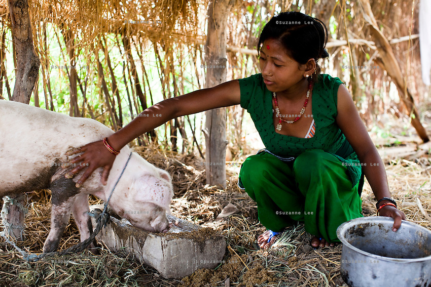 Pramila Tharu, 15, tends to livestock in Bhaishahi village, Bardia, Western Nepal, on 29th June 2012. Pramila eloped and married at 12 and gave birth to Prapti at age 13. She delivered prematurely on the way to the hospital in an ox cart and her baby weighed only 1.5kg at birth. In Bardia, StC works with the district health office to build the capacity of female community health workers who are on the frontline of health service provision like ante-natal and post-natal care, especially in rural areas. Photo by Suzanne Lee for Save The Children UK