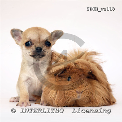 Xavier, ANIMALS, fondless, photos, SPCHWS118,#A#