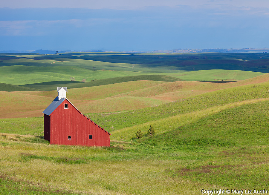 Latah County, Palouse Region, Idaho: Red saltbox style barn and rolling fields