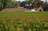 Chateau Bastor Lamontagne hidden by the vines and vineyard - Chateau Haut Bergeron, Sauternes, Bordeaux