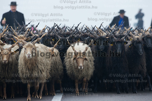 A flock of racka sheep cross a bridge during a celebration of the end of the grazing season in the Great Hungarian Plains in Hortobagy, 200 km (124 miles) east of Budapest in Hortobagy, Hungary on Oct. 21, 2017. ATTILA VOLGYI