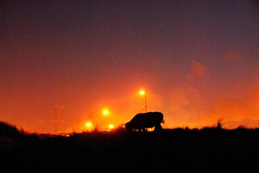 .Beverwijk, 27  jan 2009.Het industriegebied van Corus  in het avondlicht. langs het industriegebied ligt een natuurgebied met grote grazers.. Foto: (c) Renee Teunis