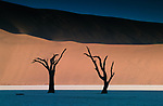 Calcified camel thorn (Vachellia erioloba), Deadvlei, Namib-Naukluft National Park, Namibia<br /> Reminiscent of a Salvador Dali painting, two tree trunks stand in stark silhouette against the warm tones of the orange sand dunes in Sossusvlei in the Namibian desert. I love the way light and form blend in this austere landscape.<br /> <br /> Canon EOS-1N, EF70–200mm lens, f/22 for 1/8 second, Fujichrome Velvia film
