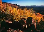 Autumn Aspen,Escudilla Mountain,Arizona