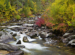 Idaho, North Central, Lowell. A tributary to the Lochsa River flows from the Clearwater National Forest in autumn.