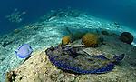 flounder bonaire