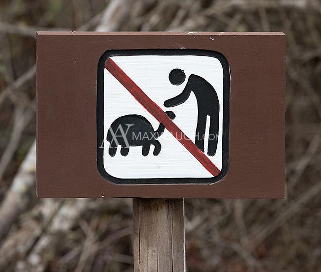 Do not pet the giant tortoises!
