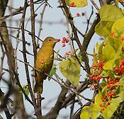Birds watching on Arkansas River near Alma