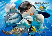 Howard, SELFIES, paintings+++++,GBHR884B,#Selfies#, EVERYDAY ,underwater,maritime,dolphins ,sharks,maritime