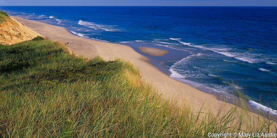 Cape Cod National Seashore, MA<br /> Dune grasses on the upper sand cliffs of Longnook Beach at Truro