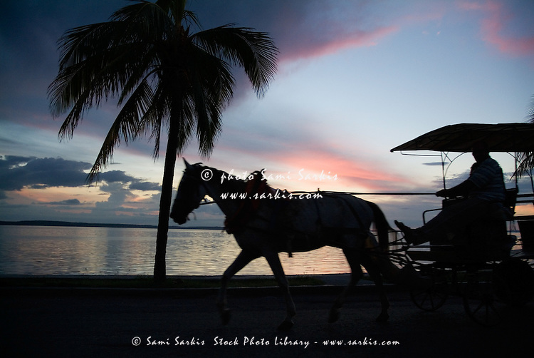 Silhouette of a horse and cart riding past a palm tree at sunset, Cienfuegos Bay, Cuba.