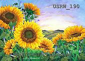 Randy, STILL LIFE STILLLEBEN, NATURALEZA MORTA, paintings+++++Sunflowers-Setting-Sun,USRW190,#i#
